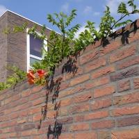 Клинкерная плитка Vandersanden 13. Viola